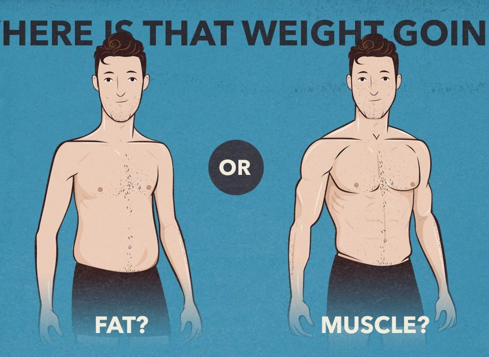 lose weight build muscle